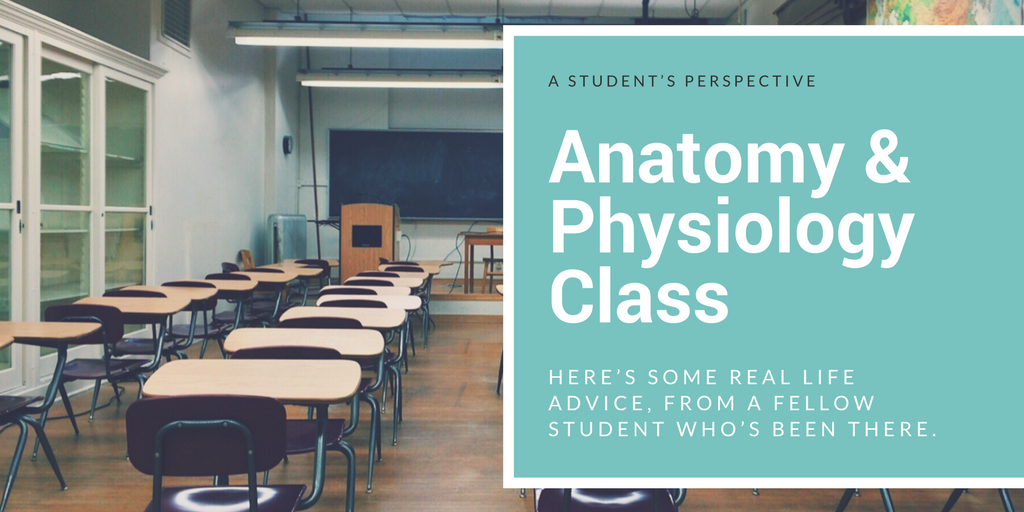Anatomy & Physiology, A Student\'s Perspective